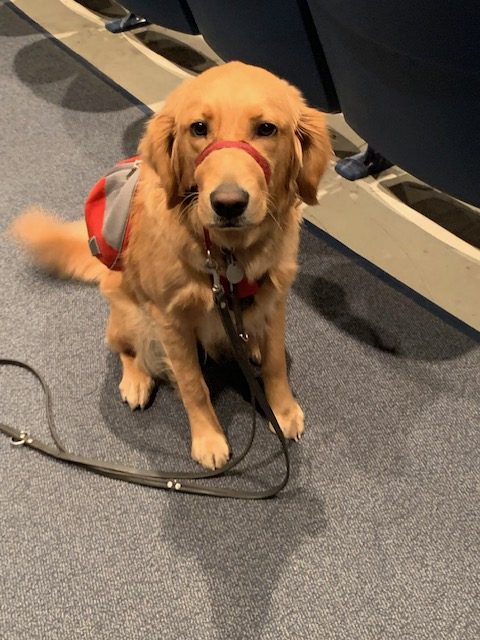 Lucy+the+Service+Dog+in+training.