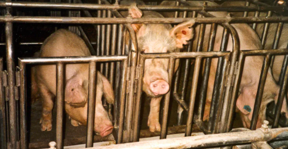 What You Didn't Know About The Meat Industry