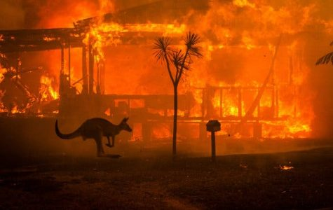 Raging fires in Australia have destroyed habitats and killed wildlife.